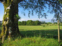 ирландское лето Стоковое фото RF