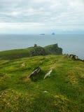 Ирландия ландшафты Стоковое Изображение