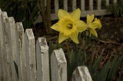 Ирландская весна Стоковые Изображения