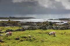 ирландский ландшафт Стоковое фото RF