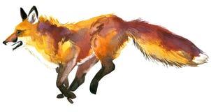 лисица Звероловство Fox милая лисица Иллюстрация Fox акварели Стоковое Изображение