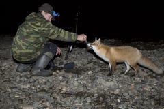 лисица Стоковое Фото