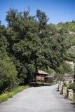 Исконный дуб holm стоковое изображение rf