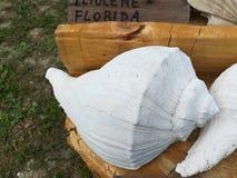 ископаемая раковина стоковое фото rf
