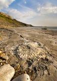 Ископаемое звероловство на береговой линии Дорсета стоковые фотографии rf