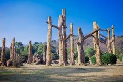 Ископаемые дерева на юге  Китая Стоковое фото RF