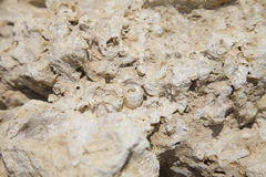 Ископаемые кораллы и раковины Стоковая Фотография RF
