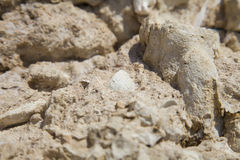 Ископаемые кораллы и раковины Стоковые Изображения