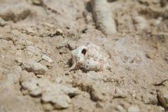 Ископаемые кораллы и раковины Стоковые Фотографии RF