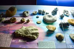 Ископаемые остатки старых животных и растений Экспонаты музея названного после Vernadsky в Москве стоковая фотография rf