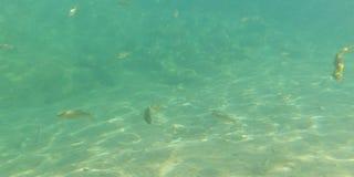 Ископаемые рыбы заводи стоковые фотографии rf