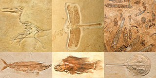 Ископаемые Стоковое Изображение RF