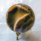 Ископаемый аммонита в утесе Стоковая Фотография