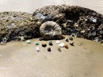 Ископаемый аммонита Стоковое Изображение RF