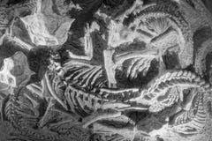 Ископаемый динозавра стоковая фотография rf