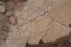 Ископаемый, окаменелый живущий организм стоковые изображения rf