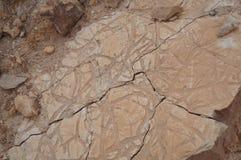 Ископаемый, окаменелый живущий организм стоковые фото