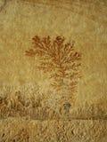 Ископаемый папоротник Стоковое фото RF