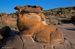 ископаемый парк kutch Гуджарата стоковые изображения