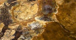 ископаемый предпосылки Стоковое Фото