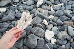 Ископаемый раковины владением женщины среди каменной кучи Стоковая Фотография RF