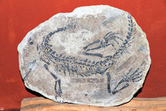 ископаемый Стоковые Фото