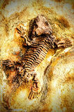 ископаемый Стоковая Фотография