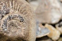 Ископаемый Ammonit Стоковое Изображение