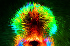 искра мухы красочная Стоковые Изображения RF