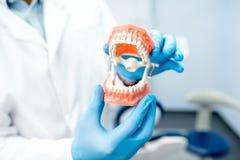 Искусственная зубоврачебная челюсть Стоковая Фотография