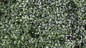 Искусственная круглая предпосылка травы Стоковые Фотографии RF