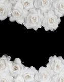Искусственная предпосылка белых роз стоковые фото
