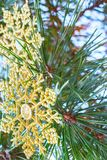 Искусственная снежинка на ветвях Стоковые Фото