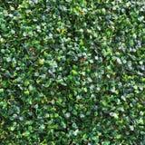 искусственная темная ая-зелен предпосылка лист Стоковое Фото