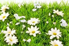 искусственная трава Стоковое фото RF