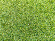Искусственная трава стоковые фото