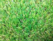 искусственная трава Стоковые Изображения RF