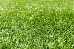 искусственная трава Стоковое Изображение RF