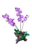 Искусственние изолированные цветки Стоковая Фотография RF