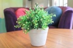 искусственние цветки предпосылки изолировали белизну вазы Стоковое Изображение