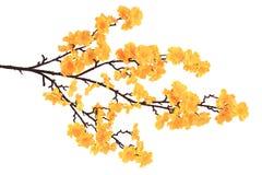 искусственний цвести ветви Стоковые Изображения