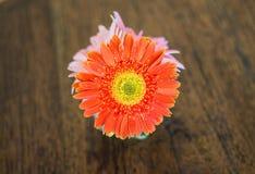 искусственний цветок украшения Стоковое Изображение RF