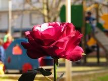 искусственним белизна предпосылки изолированная цветком Стоковая Фотография