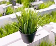 Искусственное зеленое растение на белой картонной коробке Стоковое фото RF