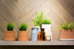 Искусственное зеленое растение Стоковые Фотографии RF