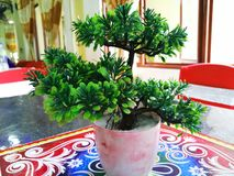 Искусственное небольшое зеленое растение стоковые фотографии rf