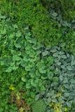 Искусственные вертикальные сады с поддельными заводами на стенах Стоковое Изображение
