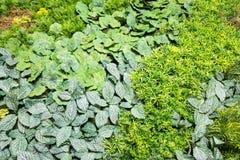 Искусственные вертикальные сады с поддельными заводами на стенах Стоковое фото RF