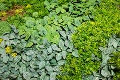 Искусственные вертикальные сады с поддельными заводами на стенах Стоковое Фото