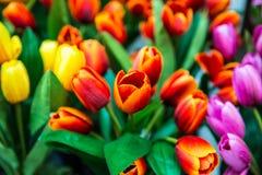Искусственные тюльпаны Стоковые Изображения